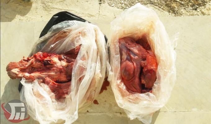 شکارچی بزرگترین جونده ایران در پلدختر به دام افتاد