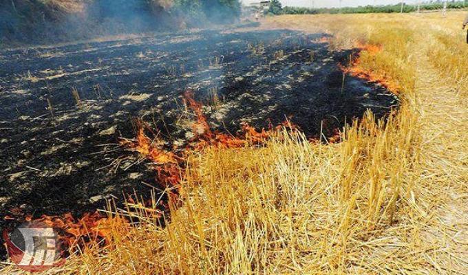 ممنوعیت آتش زدن بقایای محصولات کشاورزی