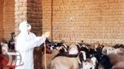 احتمال شیوع تب کریمه کنگو در لرستان
