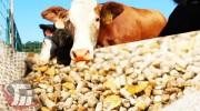 کاهش ۴۰ درصدی خوراک دام در لرستان