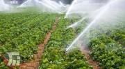 تولید سالانه سه میلیون تُن محصول کشاوری در لرستان