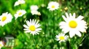 شناسایی ۴۰۰ گونه گیاه دارویی در لرستان