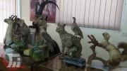 کشف تاکسیدرمی ۱۲گونه جانوری در خرمآباد